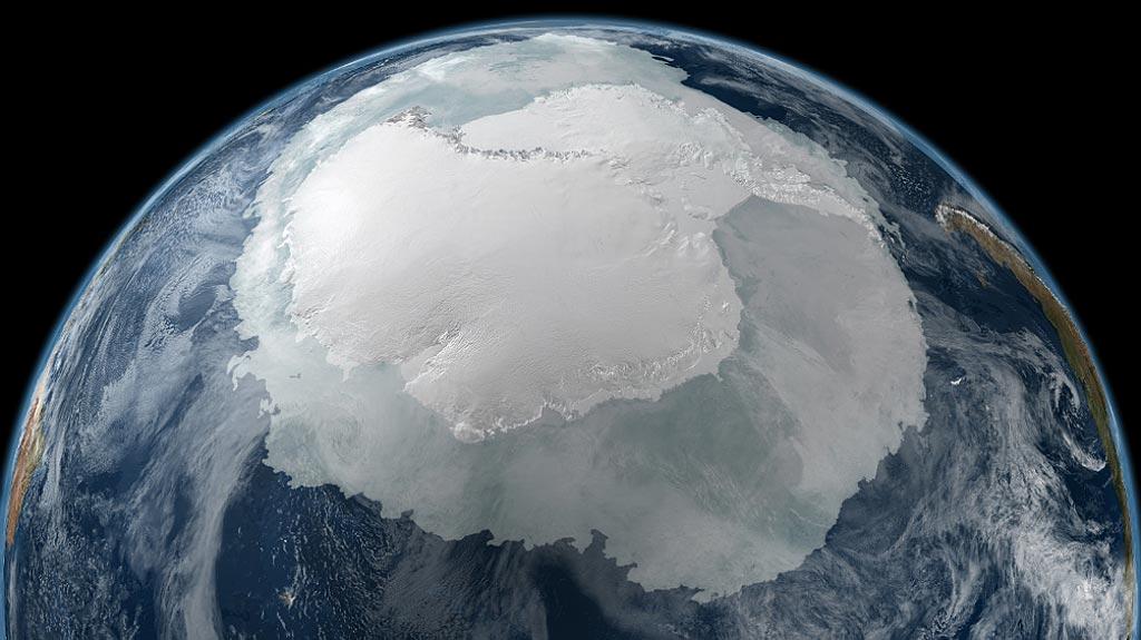 Животный мир антарктиды обсуждение