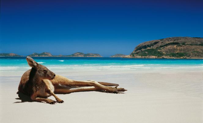 Картинки по запросу фото Новый Год в Австралии