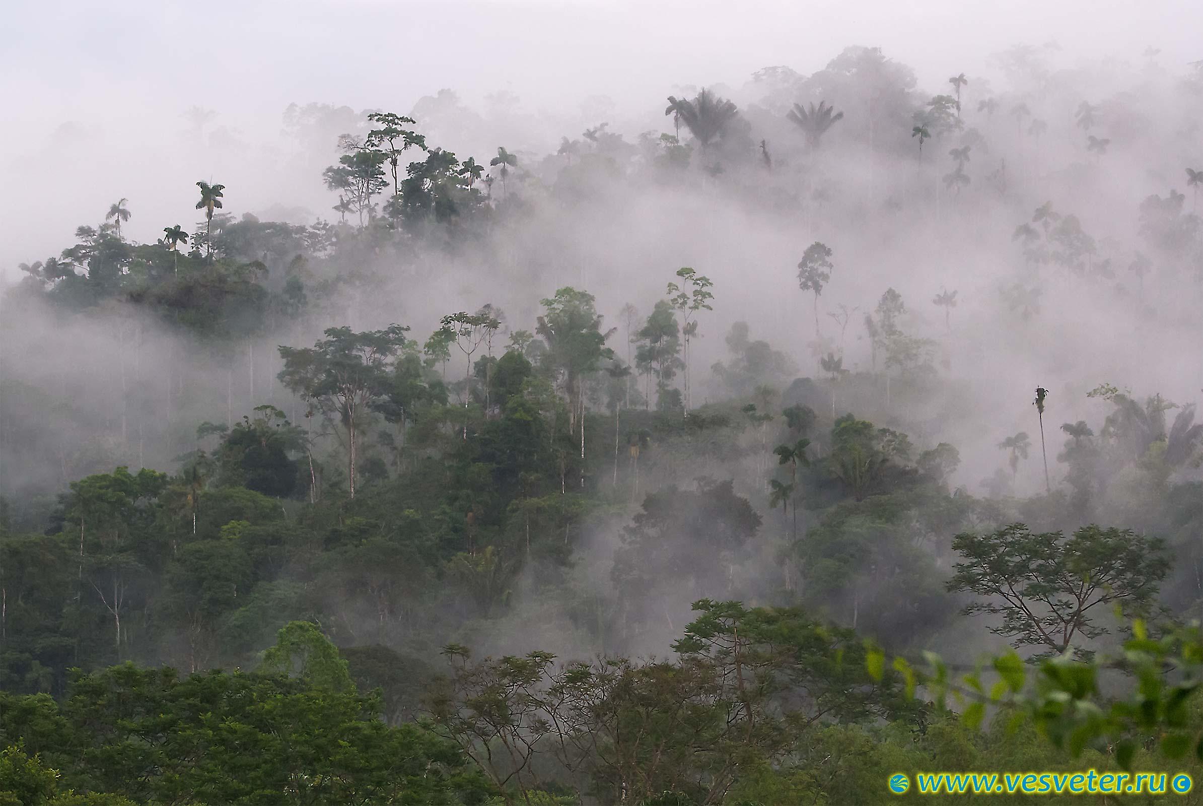 equador_djungli_02.jpg