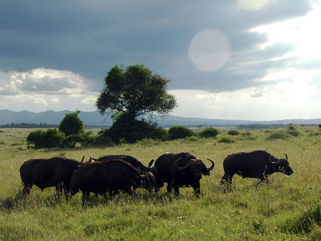 Что же увидят путешественники, совершающие за воротами национального парка найроби?