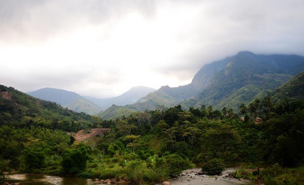 madagascar the rainforests of atsinanana
