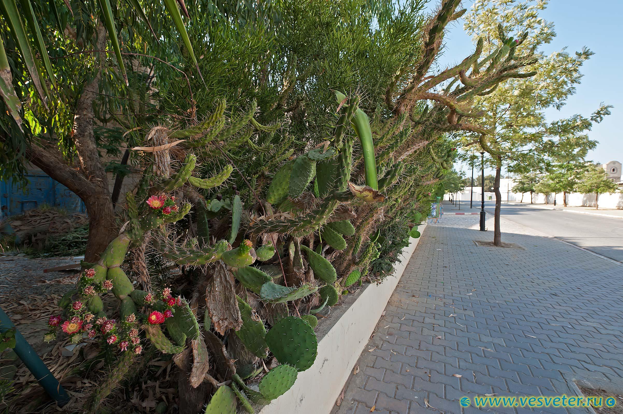 деревья туниса фото или жёлтой