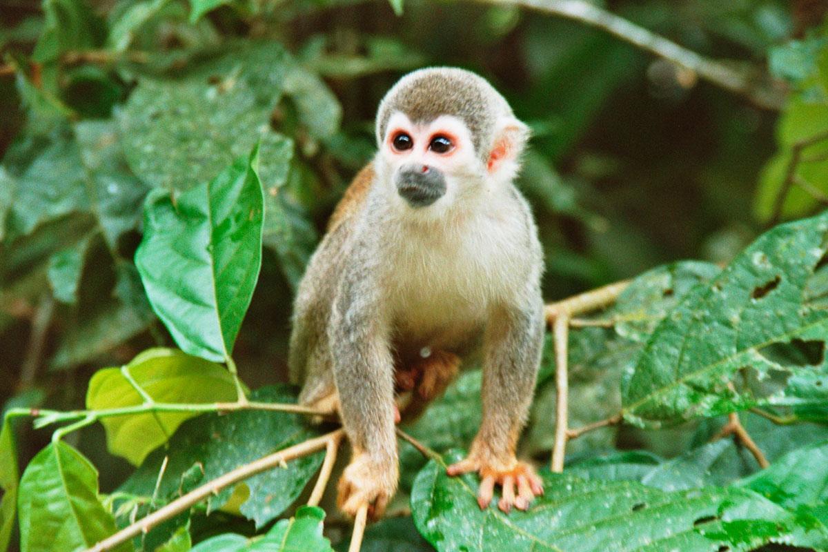 Смотреть картинки всех животных амазонки