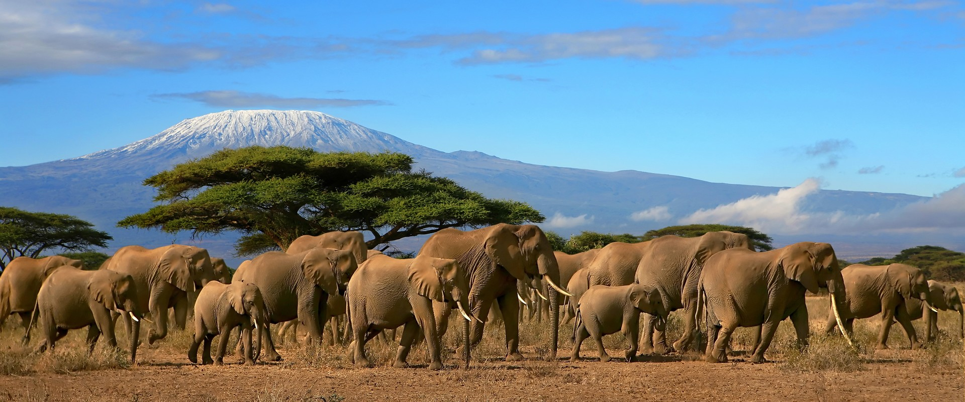 Амбосели. Стадо слонов