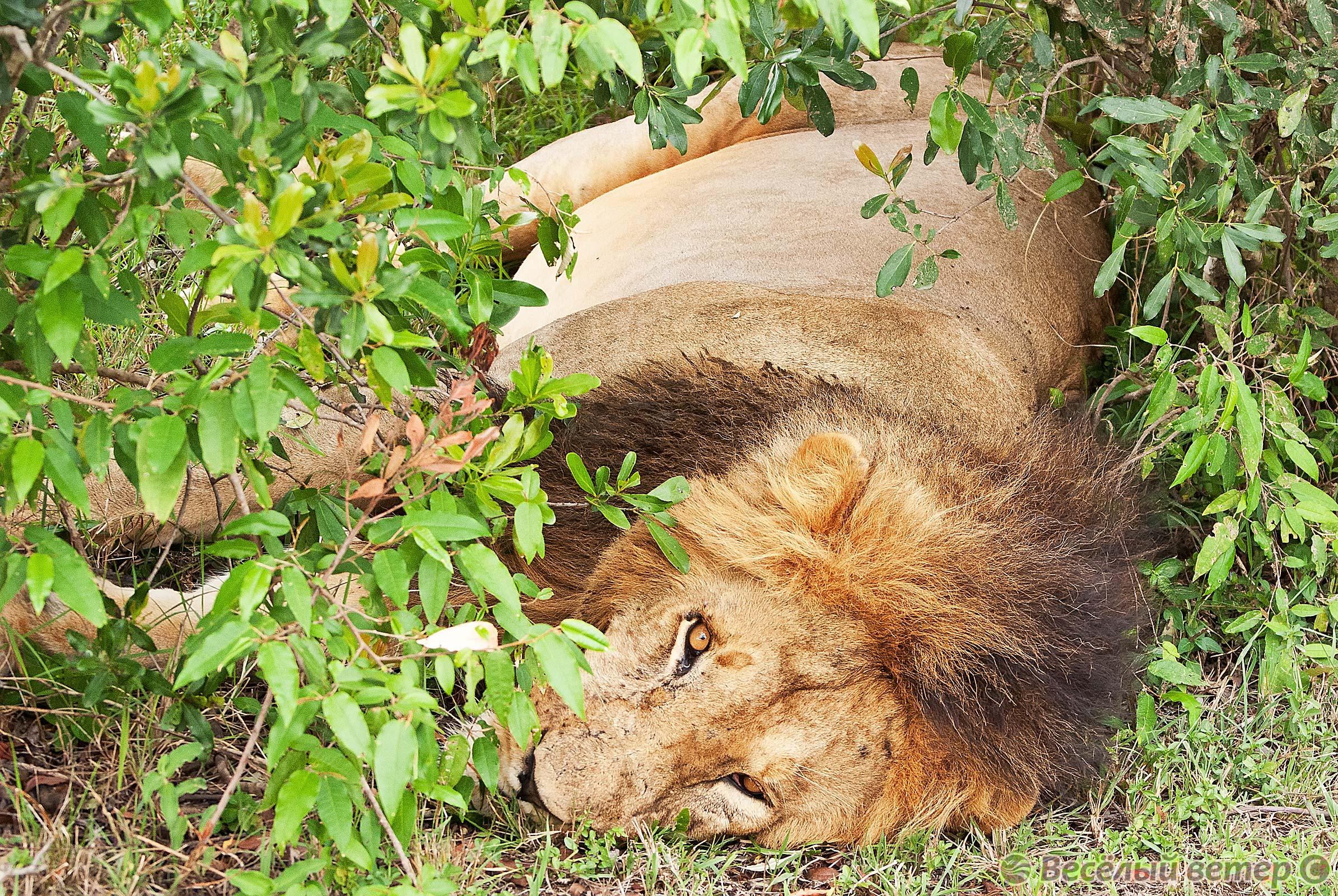 Масаи Мара, Кения