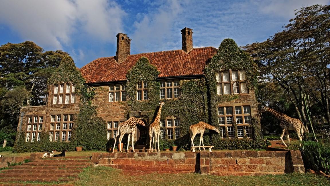 Giraffes manor