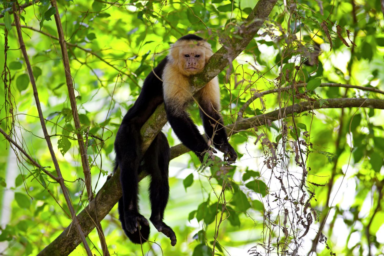 Коста-Рика. Национальный парк