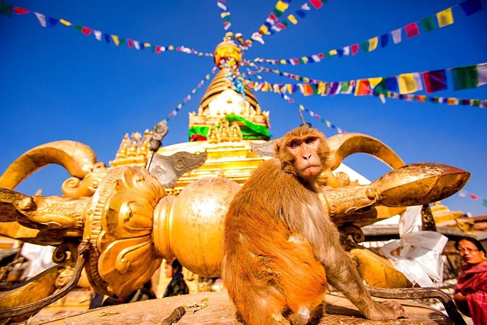 Храм Обезьян в Непале