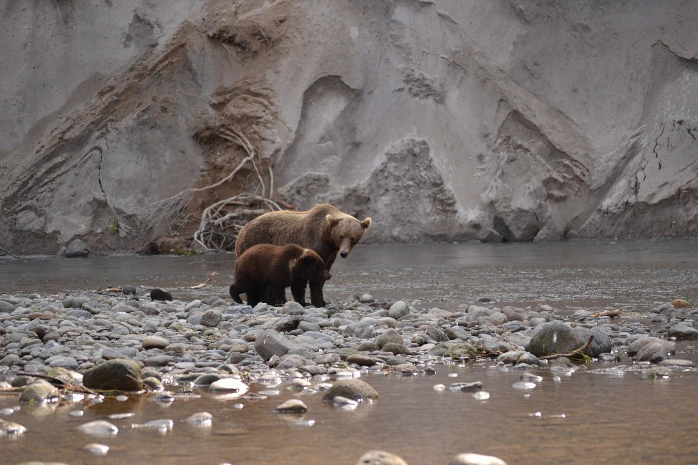 Камчатка, медведи, Курильское озеро