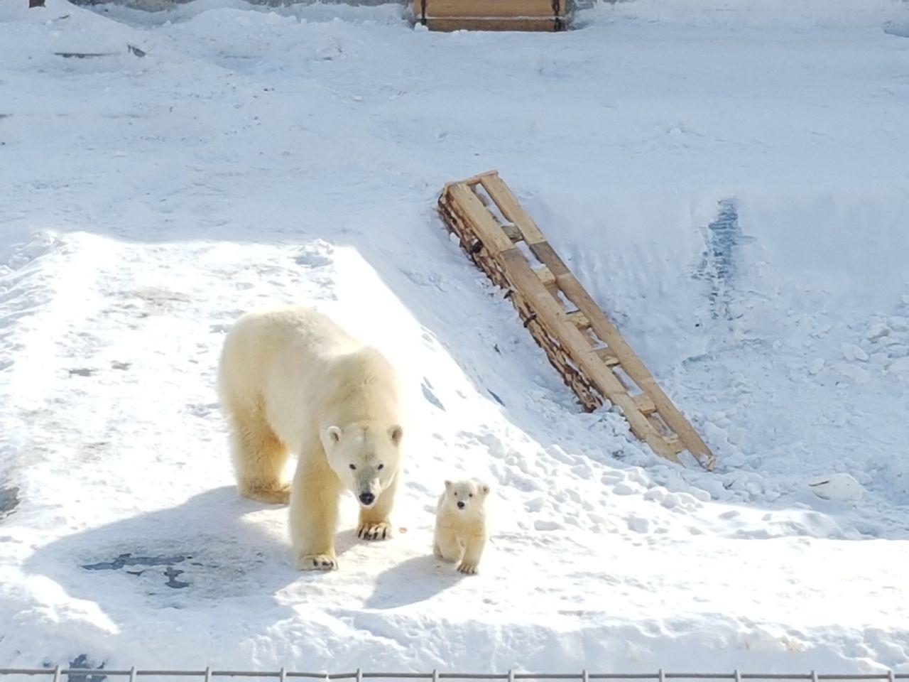Зоопарк «Орто Дойду»
