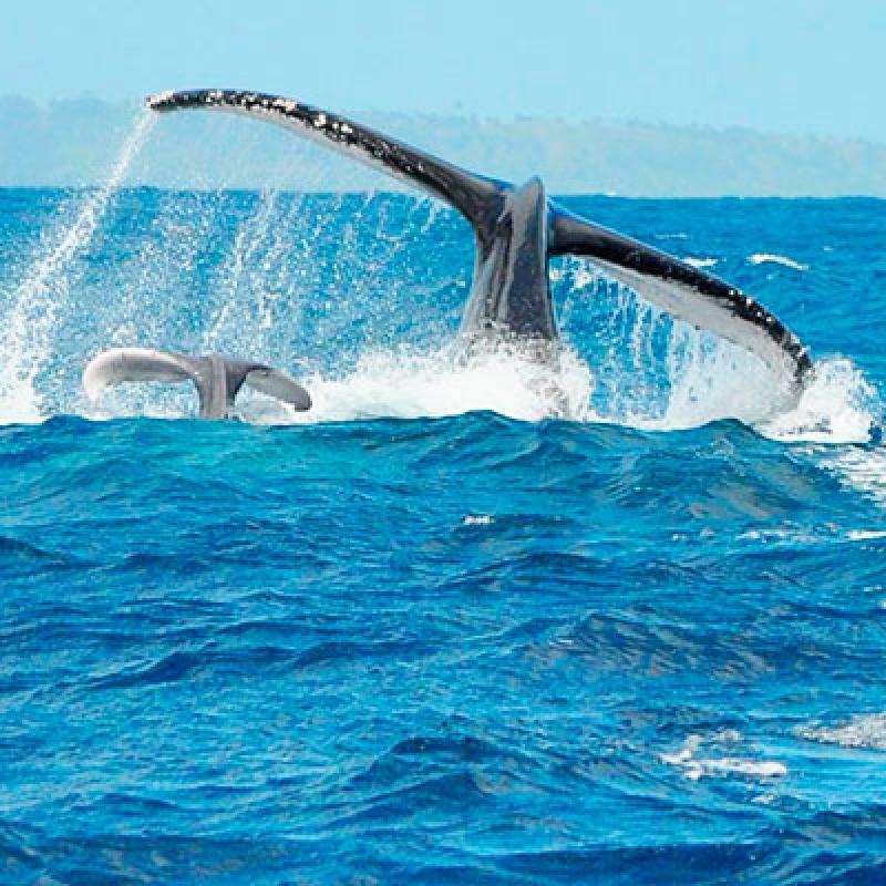 В поисках китов и лемуров
