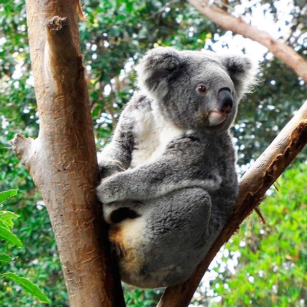 Национальные парки Австралии и Новой Зеландии
