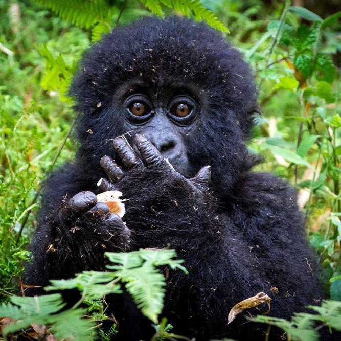 Уганда - Руанда - Конго. Приключенческий тур