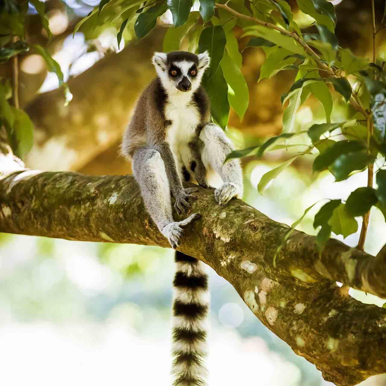 Мадагаскарская робинзонада