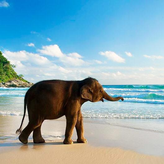 Сказки Индийского океана: Индия - Шри-Ланка - Мальдивы