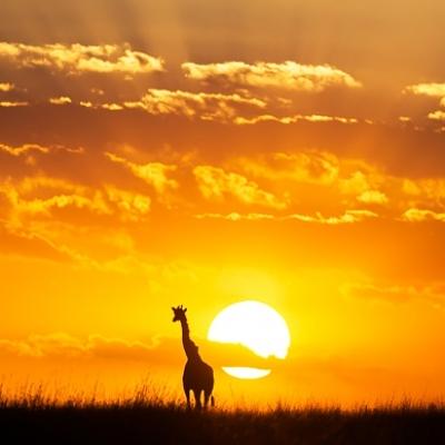 Классическое сафари в Кении